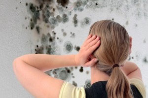 mold-and-lead-remediation