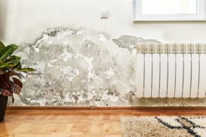 Mold Buildup on a Wall - Mold Removal Orange County